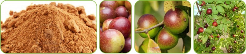 SFI Superfruit Camu Camu Berries